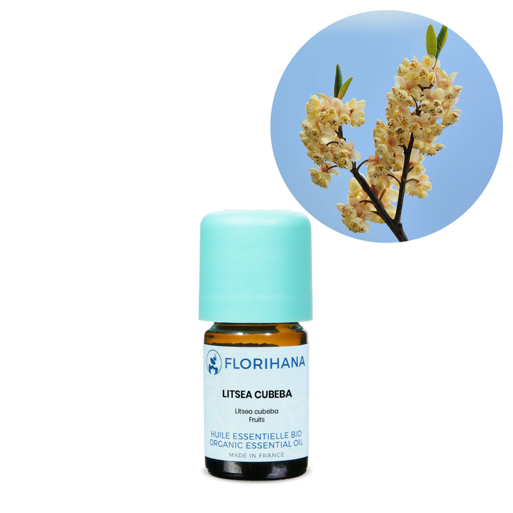 Litsea cubeba (May Chang) BIO