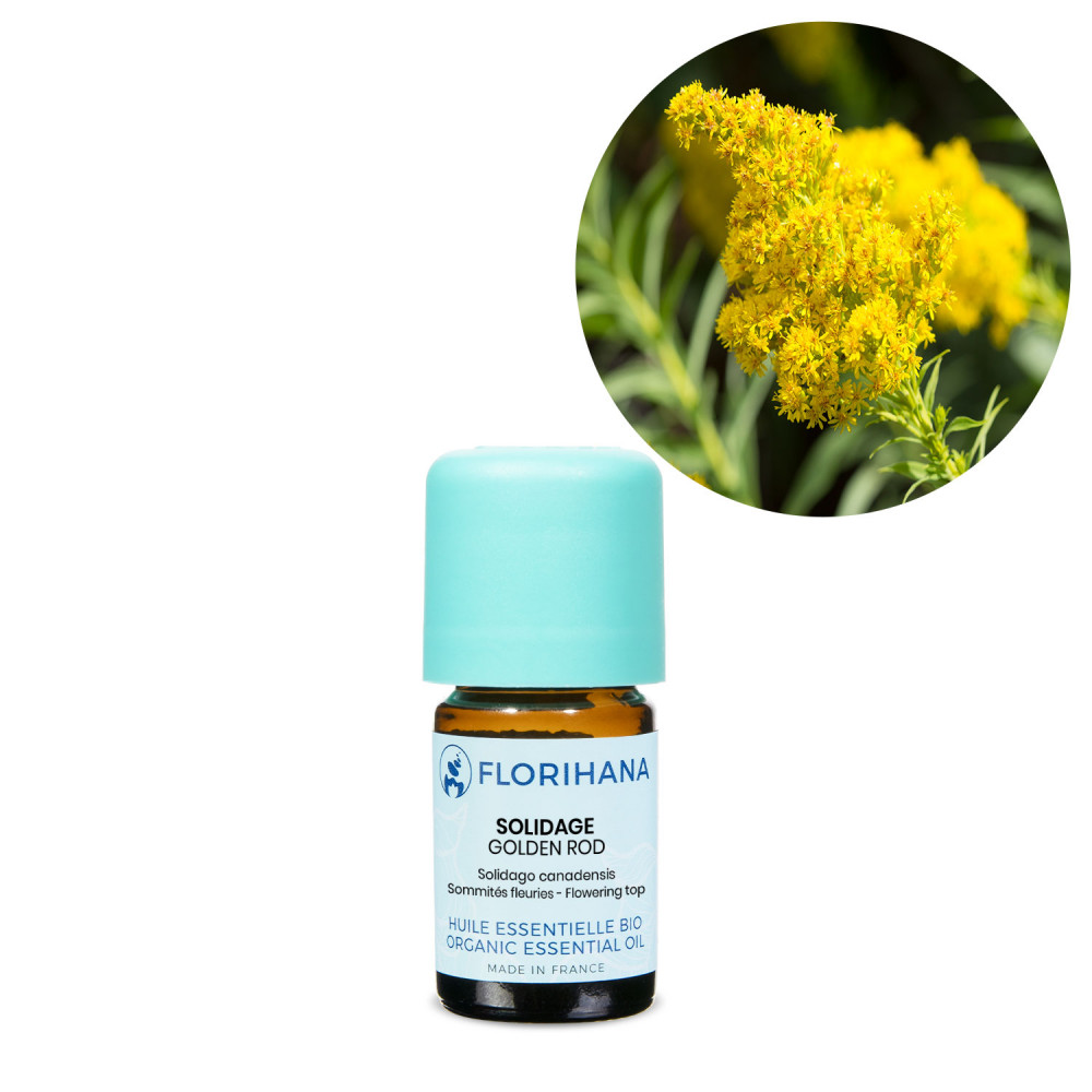 Golden Rod Organic