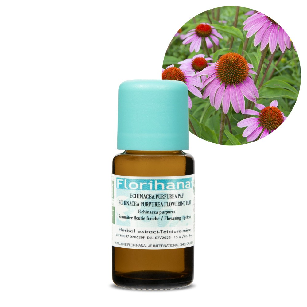 Echinacea Purpurea (Mother Tincture) Organic - Flowering Top