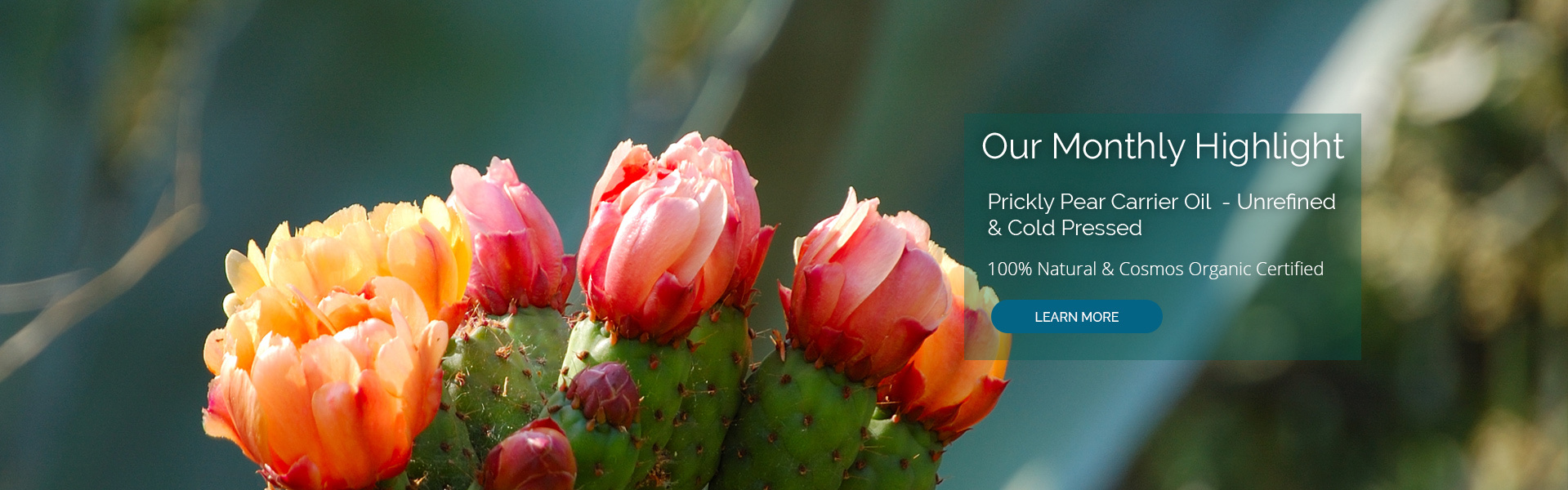 Prickly Pear Carrier Oil. Certified Organic and 100% Natural